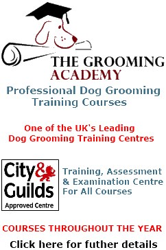 Dog Grooming Training School, courses available for all skill levels.  CLICK HERE